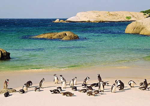 penguin party - south africa | by chillntravel