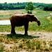 elephant august 96
