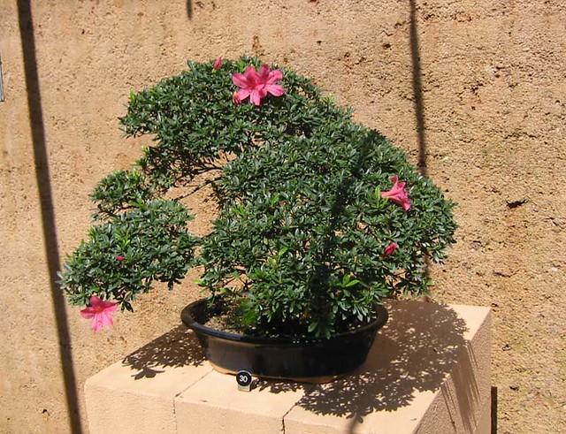 Bonsai plants new zealand landscape design in nz aucklan for Landscape design jobs new zealand