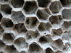 Wasp Nest | by Wendy Cook
