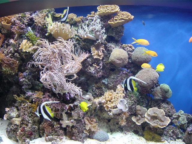 Dsc00197 Monterey Bay Aquarium California The Exhibits