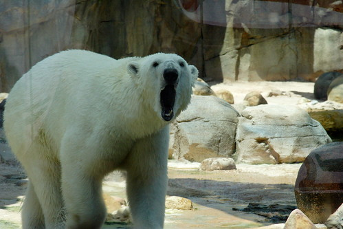 Polar Bear Lawn Decoration Christmas