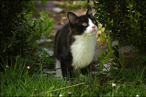 Black And White Kitten Outside | www.pixshark.com - Images ...