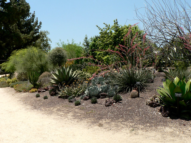 ... Desert Section Of The Pierce College Botanical Garden   By  Stephanie_Asher