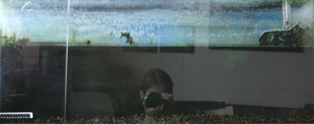Self portrait in a dirty fish tank david mican flickr for Dirty fish tank