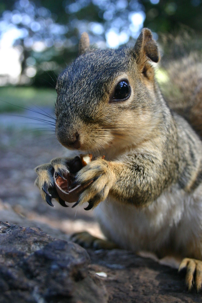 claws | Sometimes I'm glad that squirrels are not six feet ...
