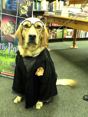 Harry Potter Dog at Barnes and Noble Cumberland | by lorax_2112