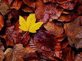 Resultado de imagem para folhas secas