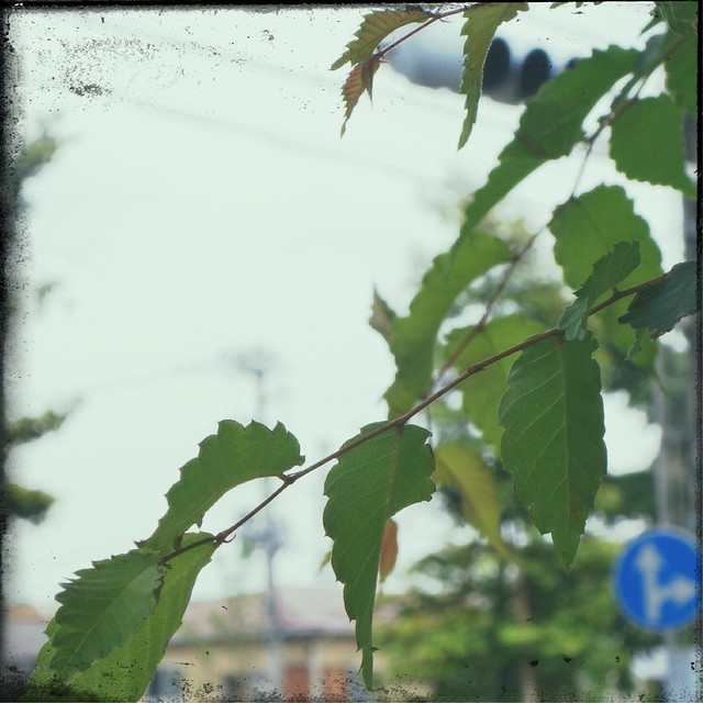Leaves on a cloudy day