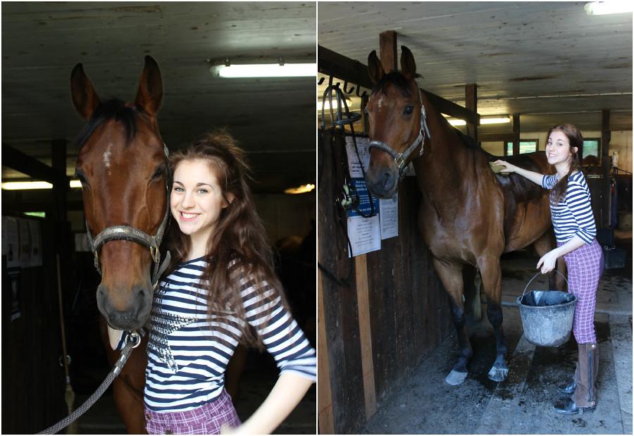 PicMonkey Collage häst 2