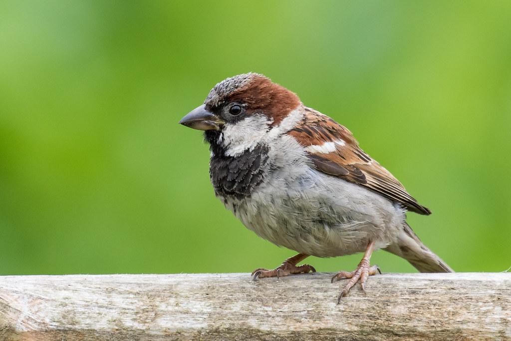 Little Sparrow Little Sparrow Plays Freeport In The Sun