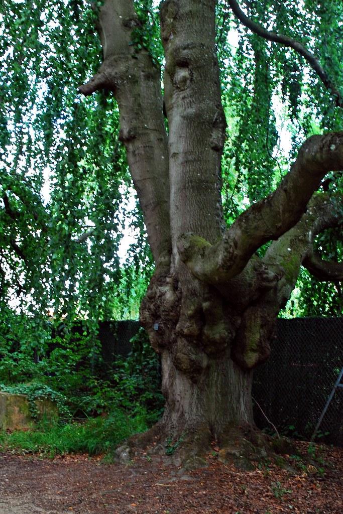 10 metz jardin botanique arbre r ve ou cauchemar for Jardin botanique metz