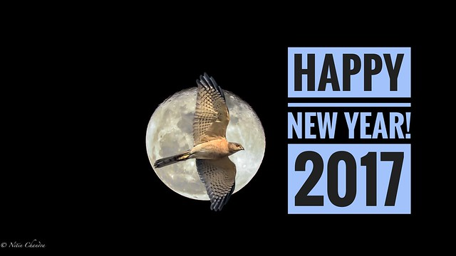 Happy New Year 2017 All!