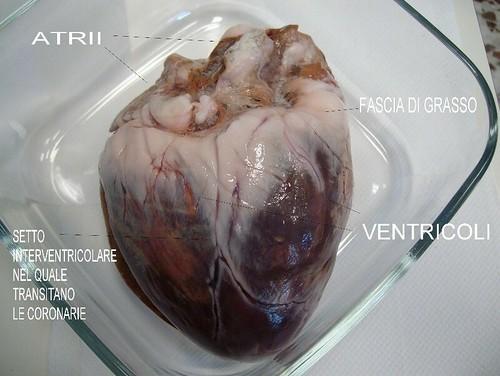 foto 35 (a) cuore di maiale