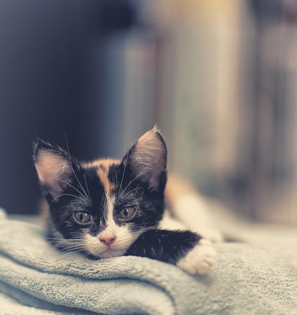 Chaton qui urine tous les matins sur le lit que faire - Mon chat fait pipi dans mon lit ...