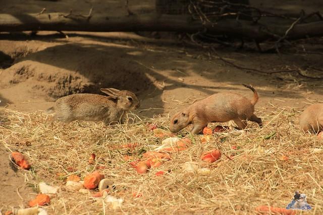 Tierpark Hagenbeck 04.07.2015  131
