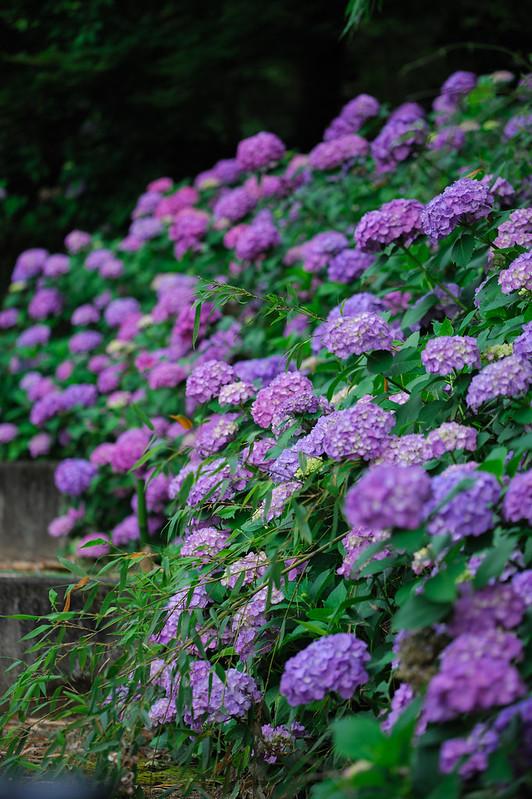 Purple Garden.