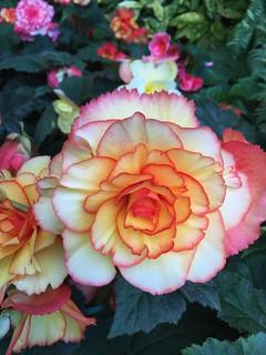 Big Blooms at Butchart