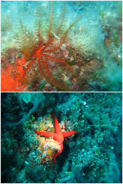 Elba Unterwasser 2015 2015-06-077