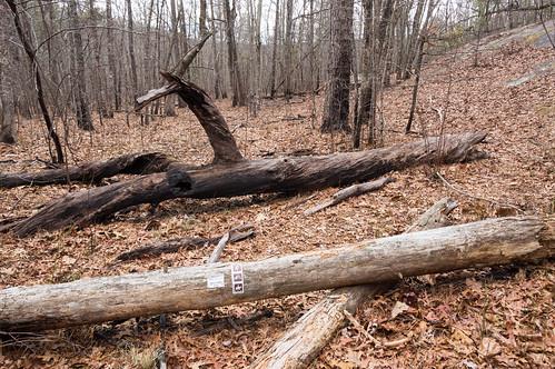 Path to Upper Grassy Creek Falls - 2