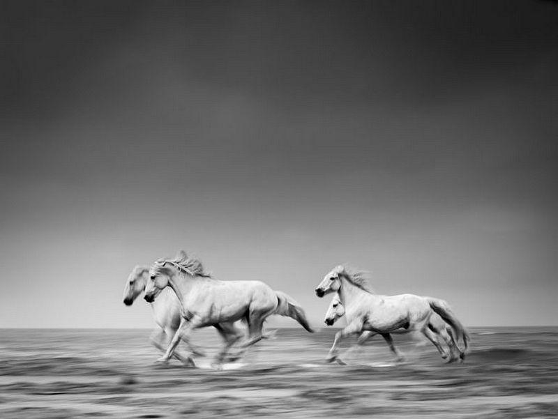 Les photos gagnantes du Monochrome Awards 2016