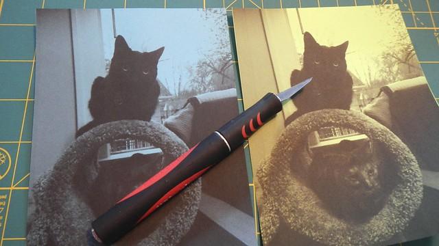 Doodle's Cats 6