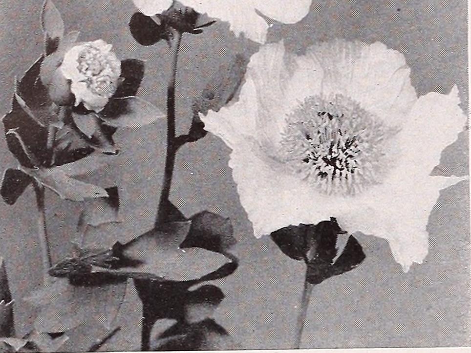 Rencontre Infidèle à Malemort Sur Correze 19360 Avec Salope Pour Sexe