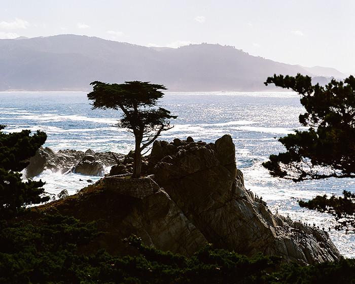 © 2016. The Lone Cypress on 17-Mile Drive in Monterey County, California. Monday, Oct. 31, 2016. Ektar +2, Pentax 6x7.