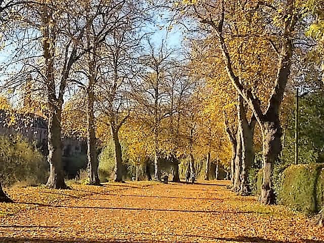 Shrewsbury Quarry Park Flickr