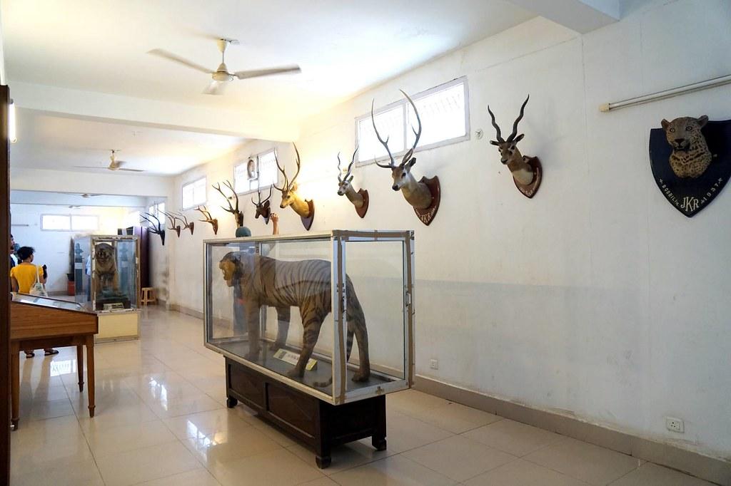 vishaka museum - Visakhapatnam - India-009