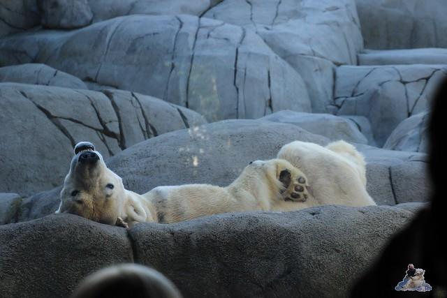 Tierpark Hagenbeck Dschungelnacht 06.05.2015   60