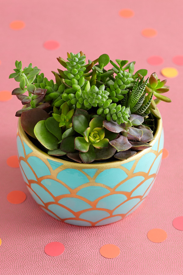 Succulent Garden Potted Plant On Table In Gold Scalloped C
