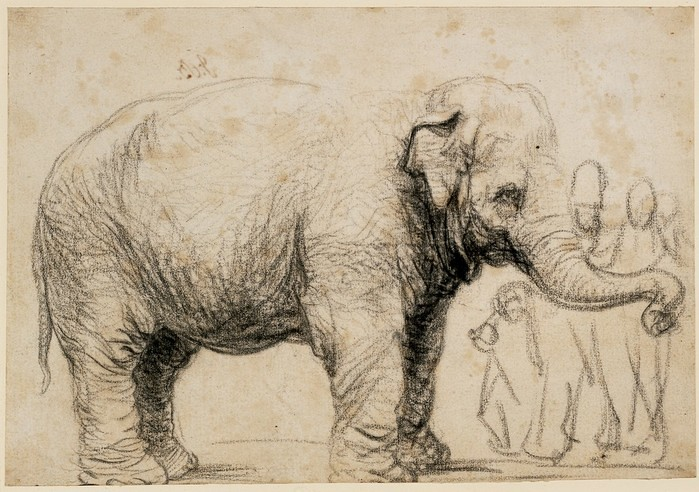 Hull Charters Lines of Thought - Rembrandt An Asian elephant © The Trustees of the British Museum