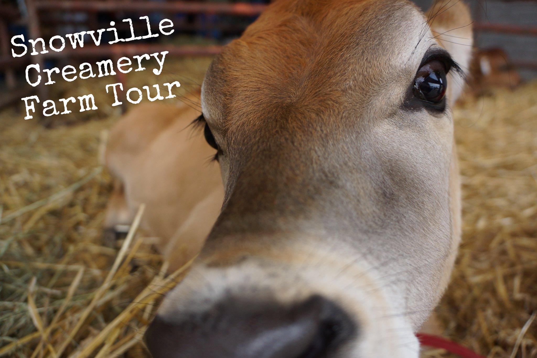 snowville creamery farm tour