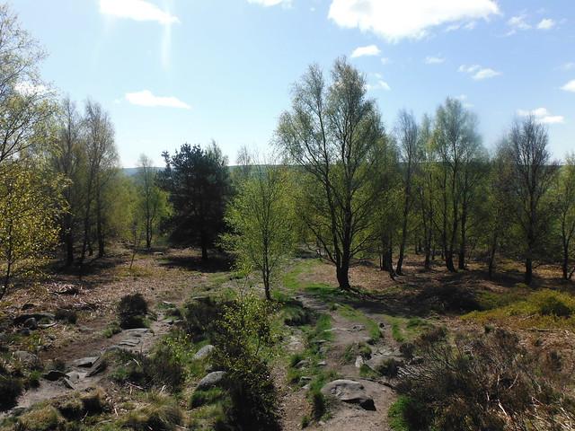 Farnhill Moor 3