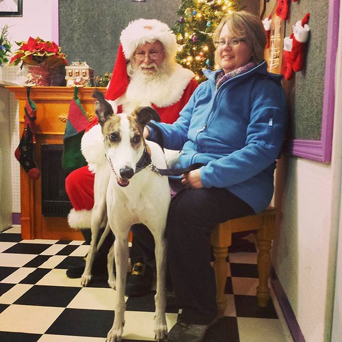 Santa, the Wife, and the dee-oh-gee! #Cane #DogsOfInstagram #greyhound