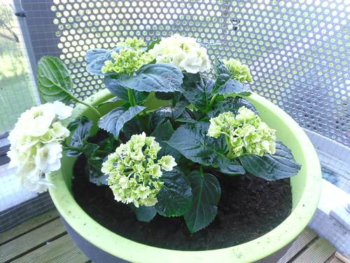 White plant on balcony