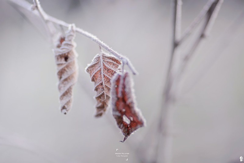 Minimalist winter nature photography