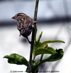 June 2015, garden birds 3/7
