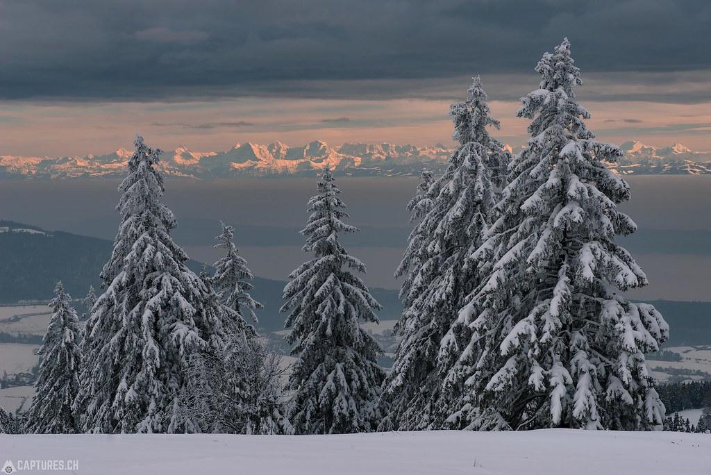 Trees - Vue des Alpes