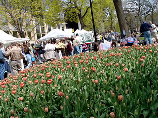 Tulips and Politics | by Ann Althouse
