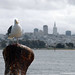 the city and the seagull