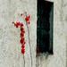 foglie rosse su muro bianco