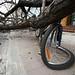 fallen_tree_bike_01