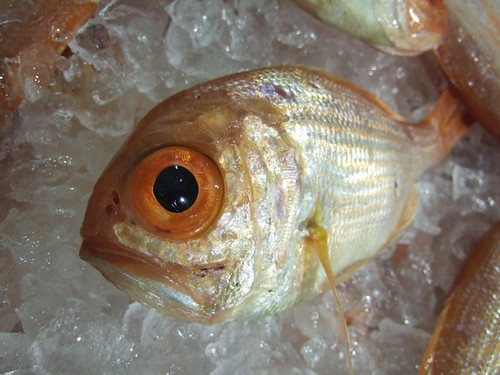 Bug eyed fish philby flickr for One eyed fish