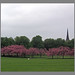 Grey skies, green grass, pink blossom