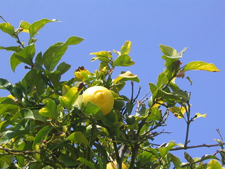 Lemon and Sky | by fonticulus