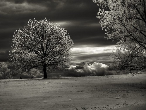 HDR IR I Woke Up and It Was Over | by Lone Primate