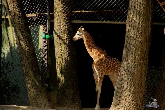 Tierpark Hagenbeck Dschungelnacht 06.05.2015   57