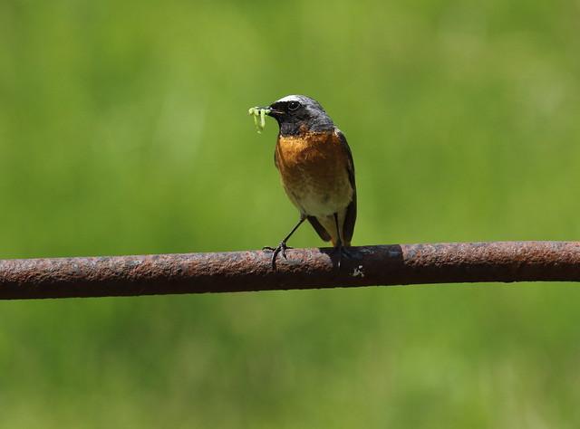 birdslakes49